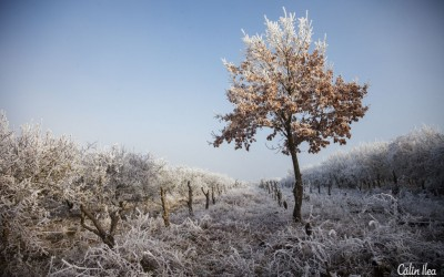 Iarna în Livada Palocsay